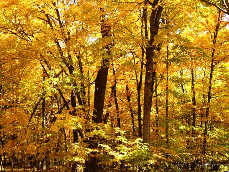 Autumn_02_1000