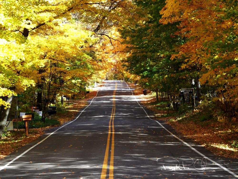 Autumn_03_1000