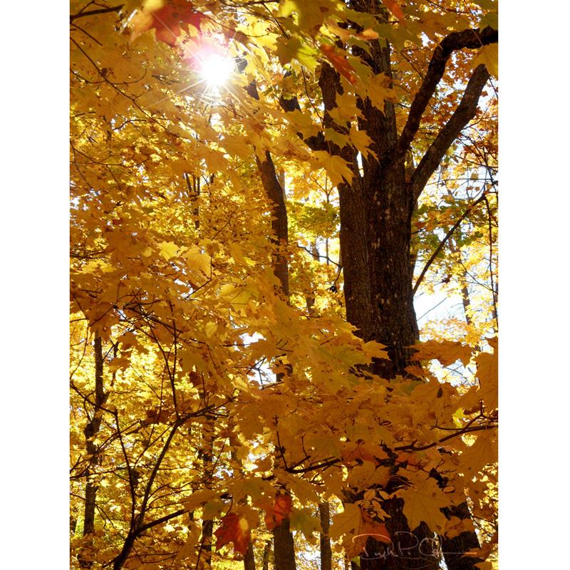 Autumn_07_1000